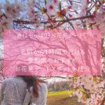 春はお花見デート♡名駅から1時間で行ける愛知県のお花見スポットを紹介!!